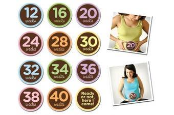 (Oh Sew Ready) - Sticky Bellies Baby Onesie Monthly Milestone Stickers