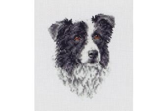 Anchor Counted Cross Stitch Border Collie