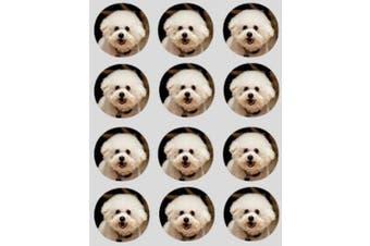 12 Bichon Frise dog design rice paper fairy / cup cake 40mm toppers pre cut decoration