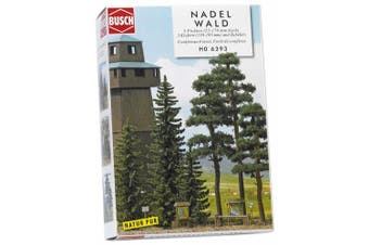 Spruce & Pine Forest