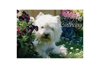 Westie Photographic Card Collection
