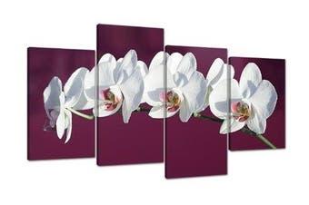 Large Plum White Floral Orchids Canvas Wall Art Prints Pictures 4116