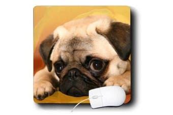 Dogs Pug - Pug - Mouse Pads