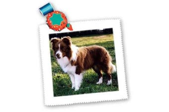 (30cm  x 30cm  quilt square) - Dogs Border Collie - Border Collie Tan and White - Quilt Squares