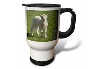 (410ml Travel Mug) - Danita Delimont - Farm Animals - Lamb, Farm animal, Otago, South Island, New Zealand-AU02 DWA6511 - David Wall - Travel Mug