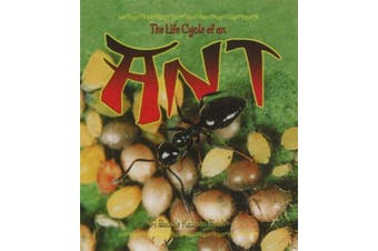 The Life Cycle of the Ant