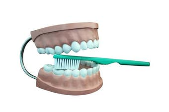 Ajax Scientific AN020-0002 Plastic Dental Care Model with Giant Toothbrush, 6 x 11cm x 13cm