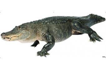 (98 x 41, American Alligator) - American Alligator - Advanced Graphics WallJammer