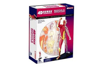4D Vision Human Anatomy - Human Muscle And Skeleton Model