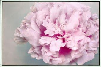 120x80cm Framed Canvas Print Pink Peony