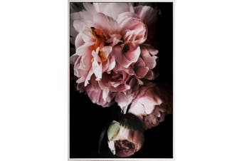 120x80cm Framed Canvas Print-Budding Bloom