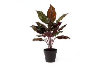 Cooper & Co. Artificial 47Cm  Peacock Plant