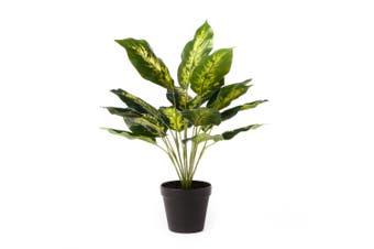 Cooper & Co. Artificial 47Cm  Diffenbachia Plant