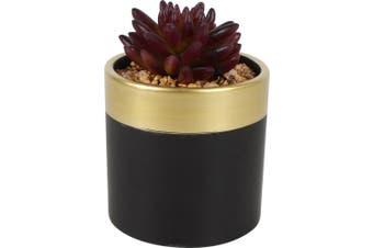 Black Gold Ceramic Planter with Plant