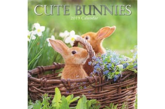 Cute Bunnies  - 2019 Premium Square Wall Calendar 16 Months New Year Xmas Decor