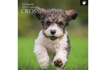 Crossbreeds 2019 Premium Square Wall Calendar 16 Months New Year Xmas Decor Gift