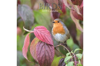 Birds 2019 Premium Square Wall Calendar 16 Months New Year Christmas Decor Gift